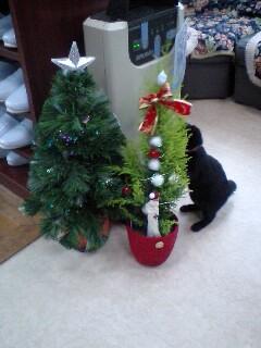 クリスマス♪