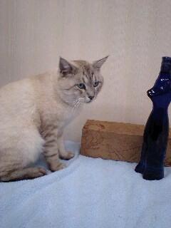 ねこブルーボトル