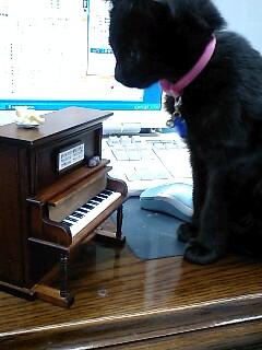 猫のオルゴール