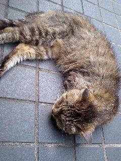 横浜野良猫