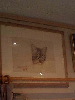 横浜猫美術館 続き