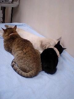 ついに猫団子