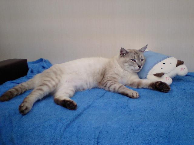 みるきいさまにいたたいた枕
