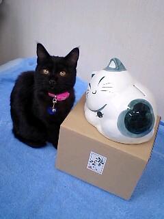 猫の貯金箱