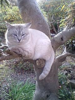 木登りヴィトンくん