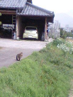 散歩中に見かけた猫