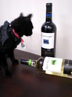 ラビにゃんワイン