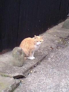 ヴィトンくんの恋猫?